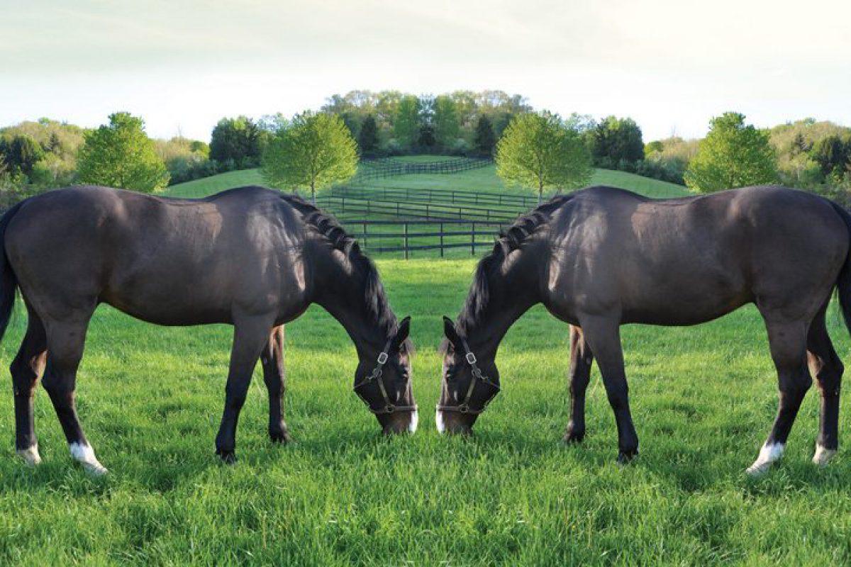 Equine Cloning