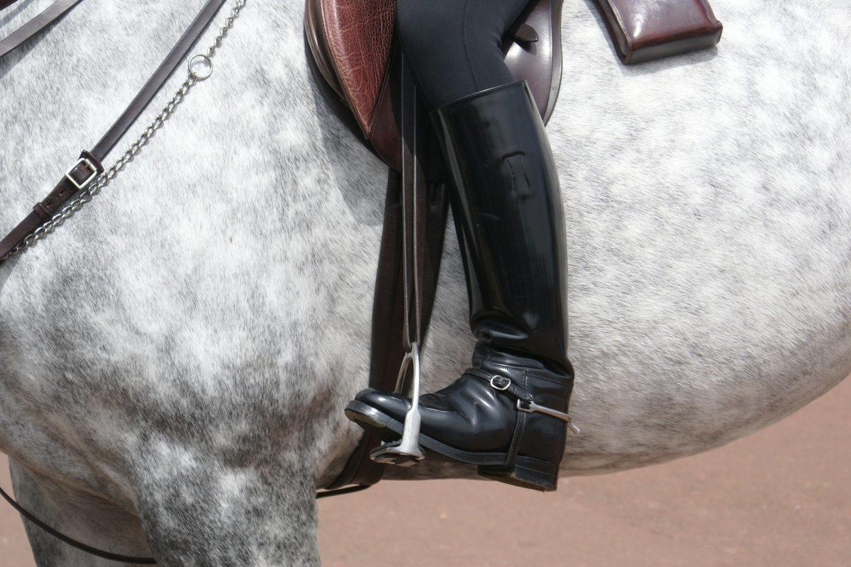 horse-241957_1920