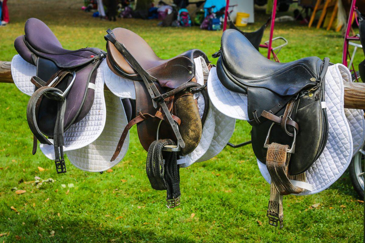 saddle2